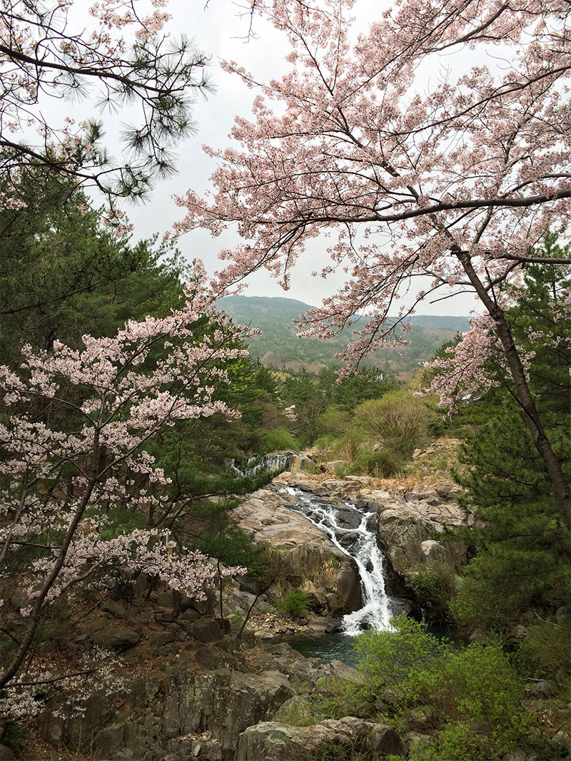 Jangsan waterfall and cherry blossoms, April 2017